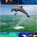 Baja Rapid Wallpapers – blue beach