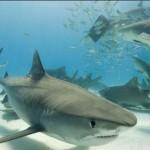 El Tiburón del siglo XXI (XviD)-[Castellano]