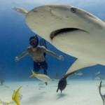 Tiburón, en las garras del hombre (XviD)-[Castellano]