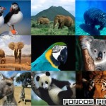 Wallpapers Animales [Putlocker]